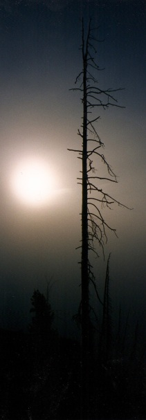 Yellowstone. Ten years after the big fire.