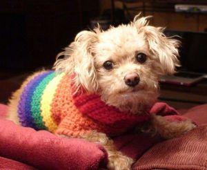 pridedog