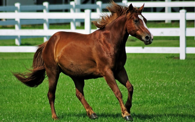 Brown Horse Galloping Wide Desktop Background