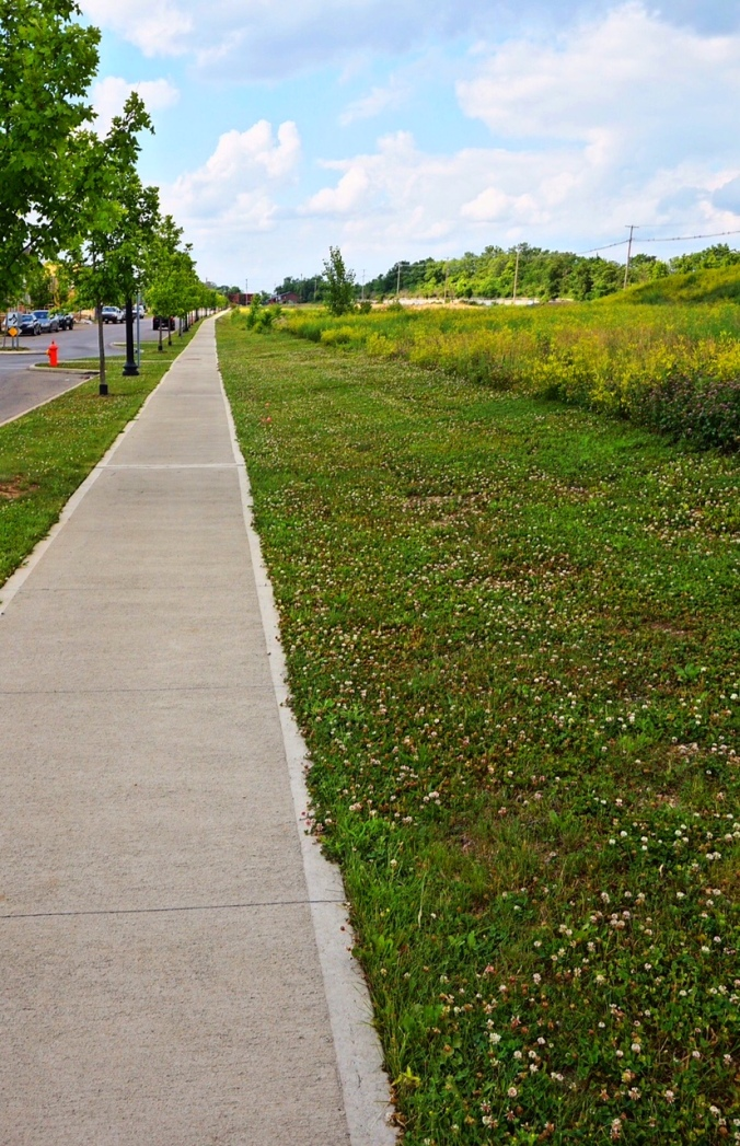 Sidewalk and trees awaiting walkers and climbers. Grant Park Redevelopment Area.