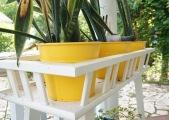 yellowpots