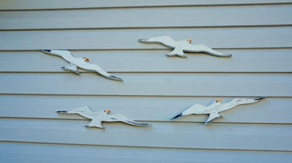 Gulls on my sister's garage.